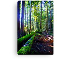 Walk in the Woods in Winter Canvas Print