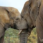 Elephant Cuddles by Ren Provo