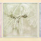 Pastel Pine by KBritt