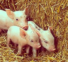 Three Little Piglets by shifty303