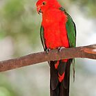 King Parrot by Vickie Burt