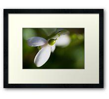 White & Green Framed Print