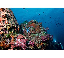 Diver and coral reefs, Similan Islands Photographic Print