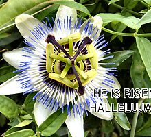 "PASSION FLOWER  ""HE IS RISEN HALLELUJAH"" by Shoshonan"