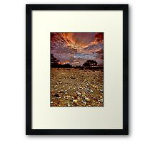 A contrast in texture Framed Print