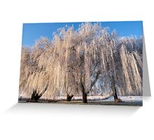 Hoar frost willows Greeting Card