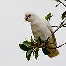 Parrot by Loreto Bautista Jr.