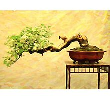 bonsai in art form acrylic Photographic Print