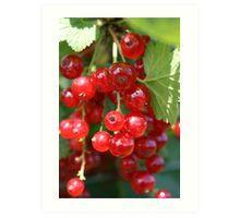 Fruit Picking Art Print