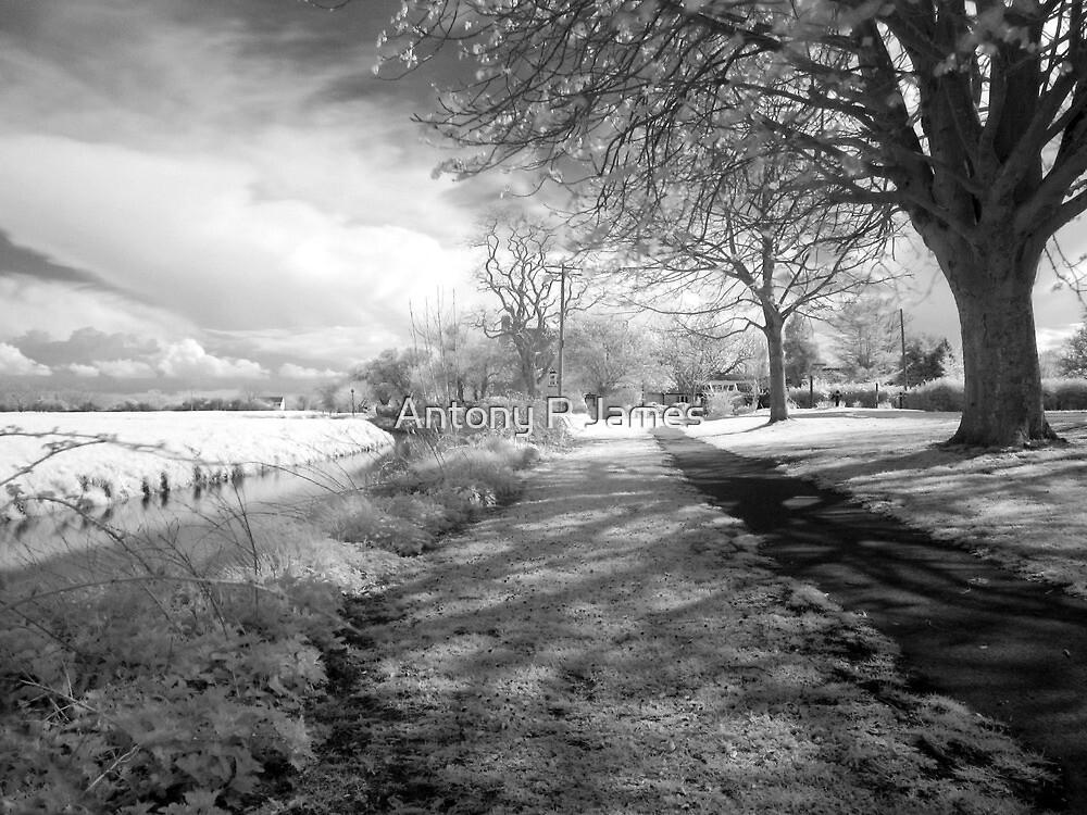 Mark, near Highbridge, Somerset by Antony R James