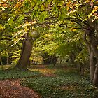 Autumn woodland by bratpyle
