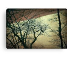 Confession Of The Woods II Canvas Print