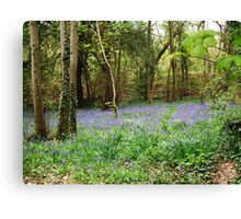 Bluebell wood Canvas Print