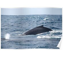 Breaching Whales Poster
