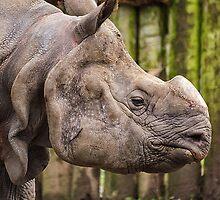 One Horned Rhino by Darren Wilkes