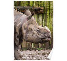 One Horned Rhino Poster