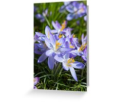 Crocus Flowers Greeting Card