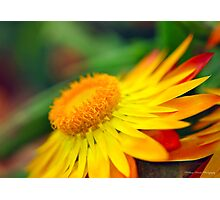Sunset Beauty - Flower Photography Photographic Print