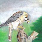 American Kestrel by artistichamster