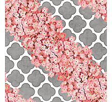 hydrangea and gray clover Photographic Print