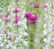 Bergamot Beauty by Sarah-fiona Helme