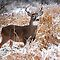 Animals in the SNOW!