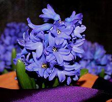 My Lovely Hyacinth by aprilann