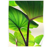 green canopy pastel Poster