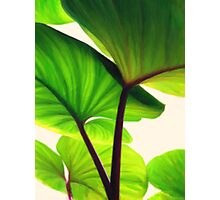 green canopy pastel Photographic Print
