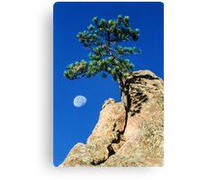 Moon Tree Canvas Print