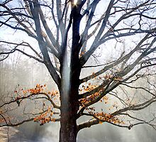 misty tree iPhone cover cell phone cover photo  by RobTravis