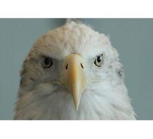 Eagle Photographic Print