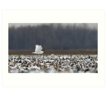 Ghost - Snowy Owl Art Print