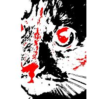 Pretty Kitty - Black White And Red Series Photographic Print