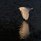 Snow over Water - Snowy Egret by Jim Cumming