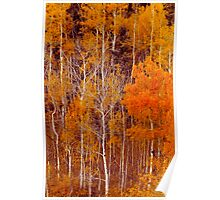 Aspen Grove in Orange Poster