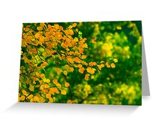 Look how I glow for you II Greeting Card