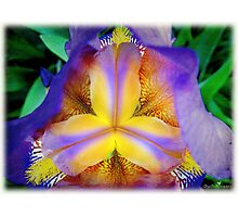 Iris intensity Photographic Print