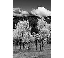 Unnamed Aspen Grove Photographic Print