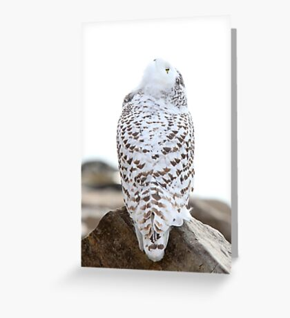 Keep Watching the Skies - Snowy Owl Greeting Card
