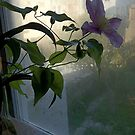 Clematis in Foggy Window by Barbara Wyeth