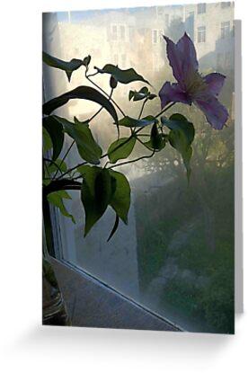 Clematis in Foggy Window by Barbara Wyeth