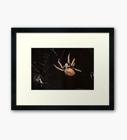 Web Spinning Framed Print