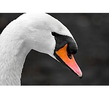 Orange Beak Photographic Print