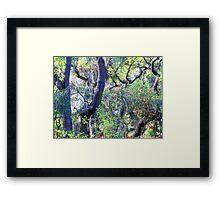Fauvist Forrest Framed Print