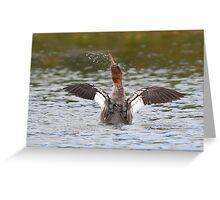 Common Merganser shakes it off Greeting Card