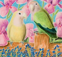 Peach-faced Lovebird by jkartlife