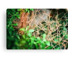 Slow Decay Canvas Print
