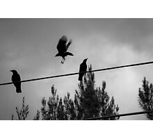 Birds on a Wire Photographic Print