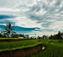 Somewhere in Ubud by Purnawan Taslim Hadi